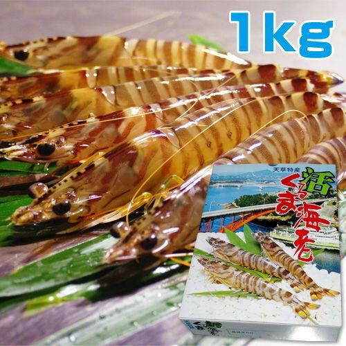 熊本天草産 活くるま海老1kg(約35尾前後入り)