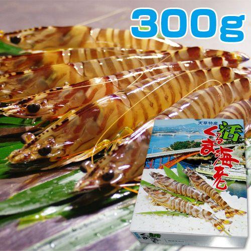 熊本天草産 活くるま海老 300g(約10尾前後入り)