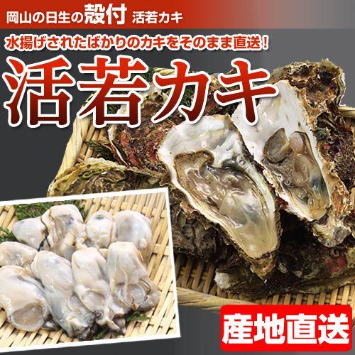 【今季販売終了】岡山 日生 殻付き 活若牡蠣 約50個前後