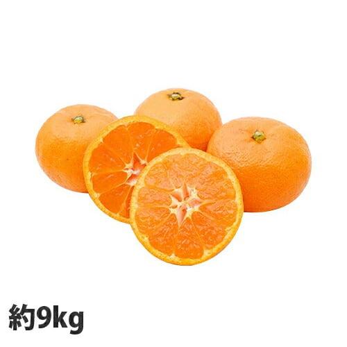 【送料無料】熊本県産 訳ありみかん 9kg+保証分500g【他商品と同時購入不可】